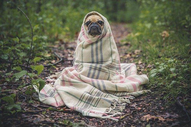 Relaks w świecie zwierząt, czyli jak odpoczywa pies?