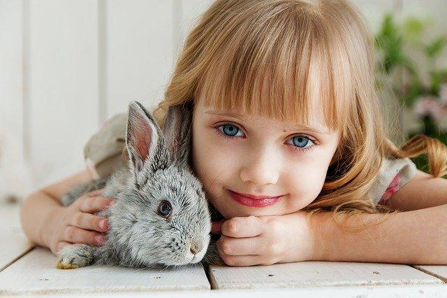 Królik miniaturka – co warto wiedzieć zanim zwierzę pojawi się w naszym domu?